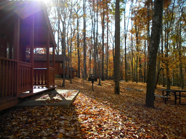 Mayo Park Cabins in The Fall
